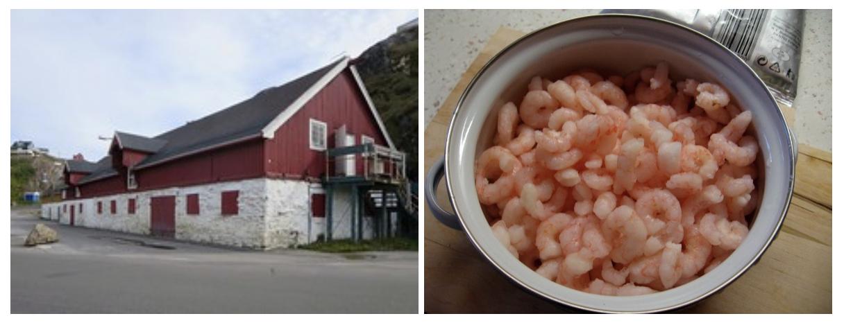 Greenland Shrimp